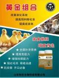 雏鸡开口药用黄金组合提高成活率