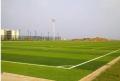 标准足球场草皮造价