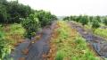 农业种植使用防草布效果显著?一亩成本几百块,物美价