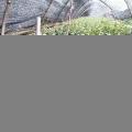 蓝莓苗种植 山东蓝莓小苗价格合理 现挖现卖 热销